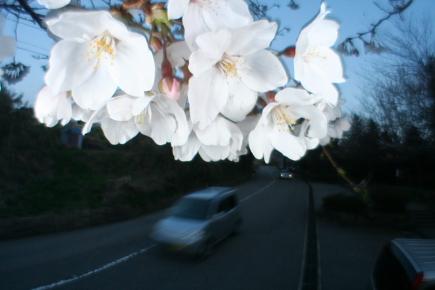 20070406_03.JPG