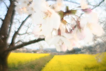 20070408_05.JPG