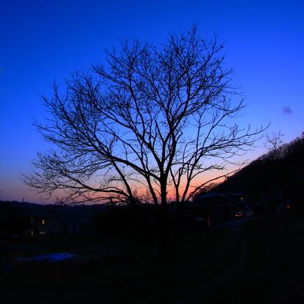 20090402_03.jpg
